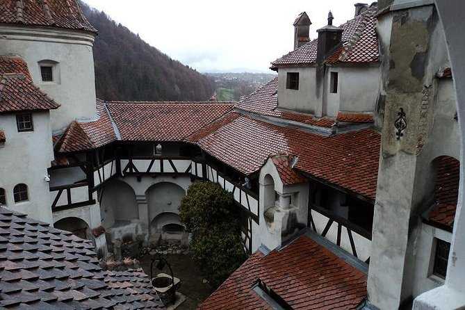 One day trip Bear Sanctuary, Dracula Castle, Rasnov Fortress from Brasov photo 8