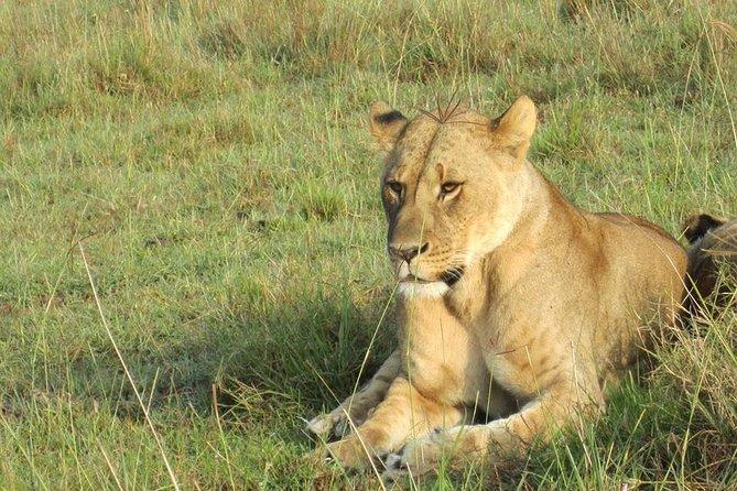 18 Days Kenya Golden Safari