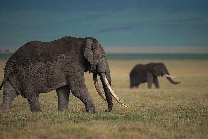 6 Days and 5 nights Amboseli and Masai Mara Safari
