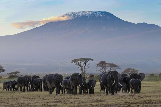 Amboseli National Park Day Tour