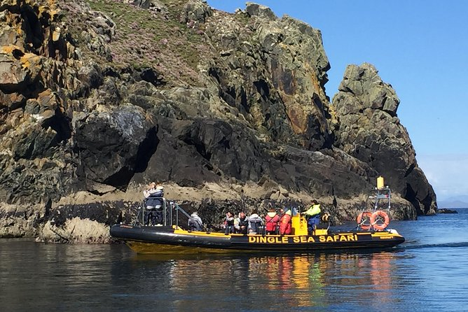 Exhilarating Rib experience - Dingle sea safari