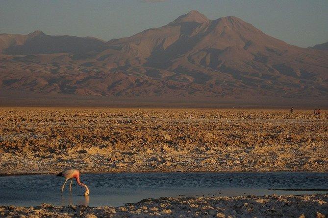 Half day Laguna de Chaxa and Toconao - San Pedro de Atacama