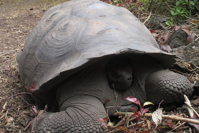 6 Day Trip in Galápagos Land-based including 4 Islands photo 8