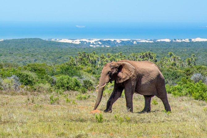 Addo Elephant Park Game Drive
