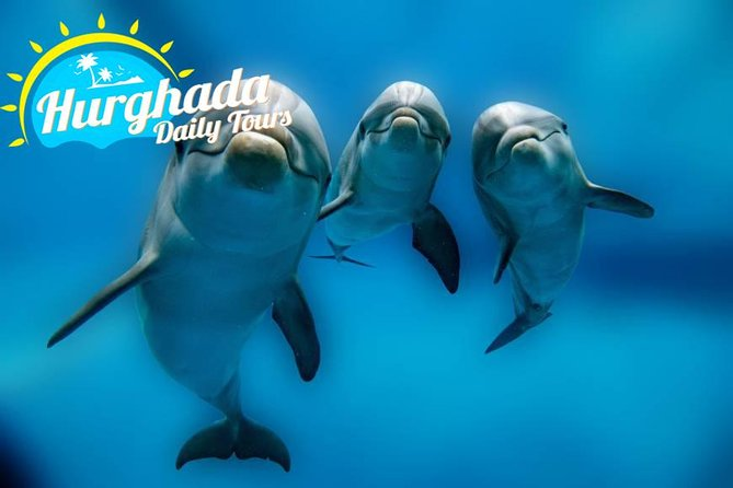 From hurghada get close to dolphins snorkeling tour