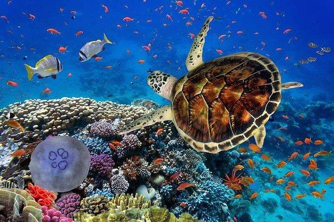 Marsa Mubarak Snorkeling Sea Trip – Marsa Alam