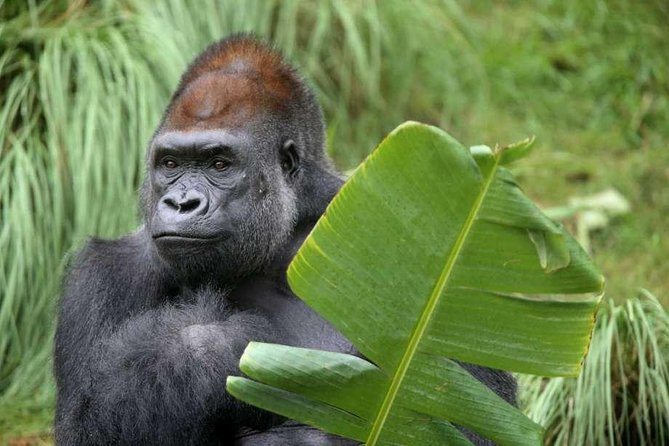 3 Days Gorilla Tracking In Bwindi Impenetrable Forest National Park