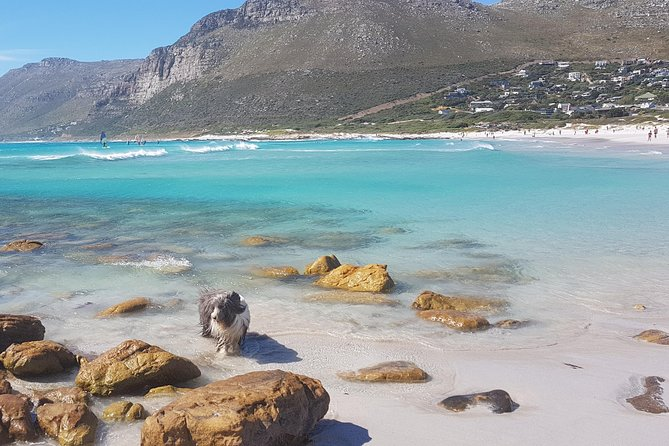 Private Tour Of Penguins, Cape Of Good Hope & Peninsula.