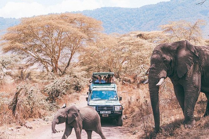 5 days serengeti, ngorongoro, tarangire & manyara lodge tour photo 9