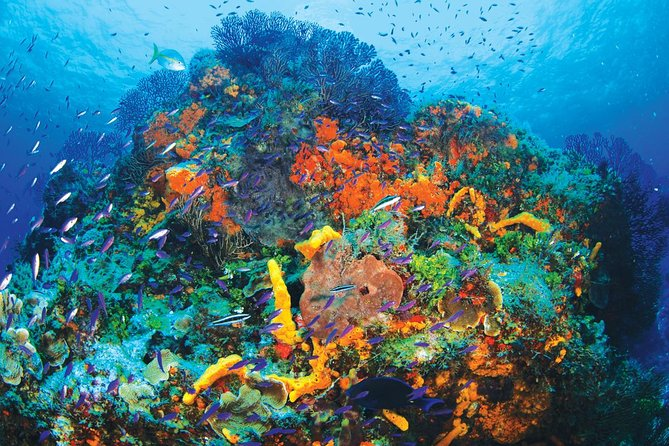 Discover Scuba Diving - One Tank at Coral Reef