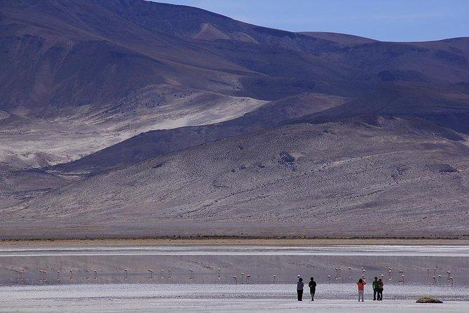 Full day Salar del Huasco National Park - Iquique
