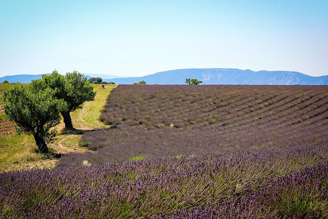 Lavender fields of Provence & Forcalquier provençal street markets private tour