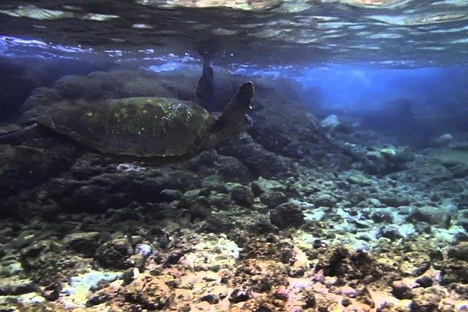 Beach Snorkel - Sea Turtle and Black Sand Lagoon