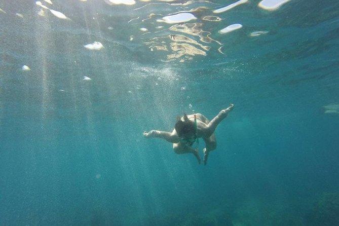 Catalina Island & Snorkeling Tour - Full Day