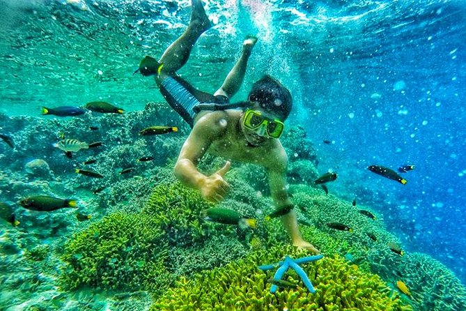 East Java Exotic Day Tour: Menjangan & Tabuhan Island Open Trip from Banyuwangi