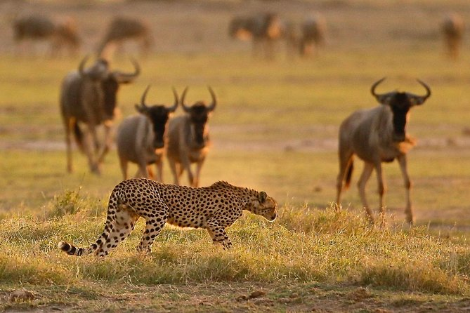3 Day 2 Nights Maasai Mara Guided Safari (Nairobi - Maasai Mara - Nairobi)