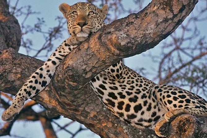 3-Day Kruger National Park Big 5 Camping Safari