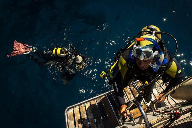 Scuba Diving Courses or Try Diving PADI or SSI