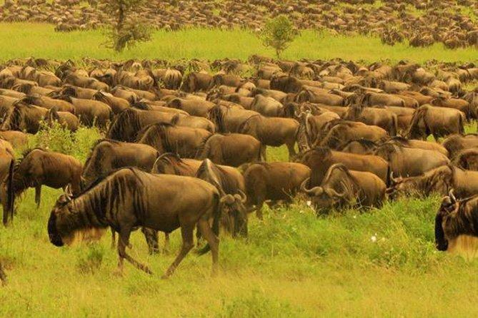 Ets N361 3days 2nights Safari To Masai Mara With Balloon Experience