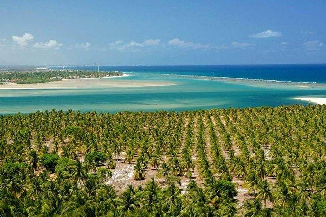 Tour à Praias do Francês,Barra de São Miguel e Gunga – De Maceió by Edvantur
