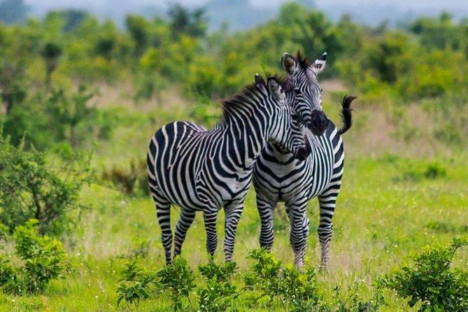 5 Days To Serengeti & Tarangire