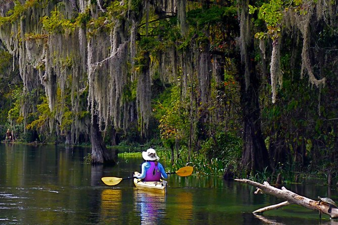 Wekiva RIver Paddle- Wilson's Landing to Highbanks (10 miles)