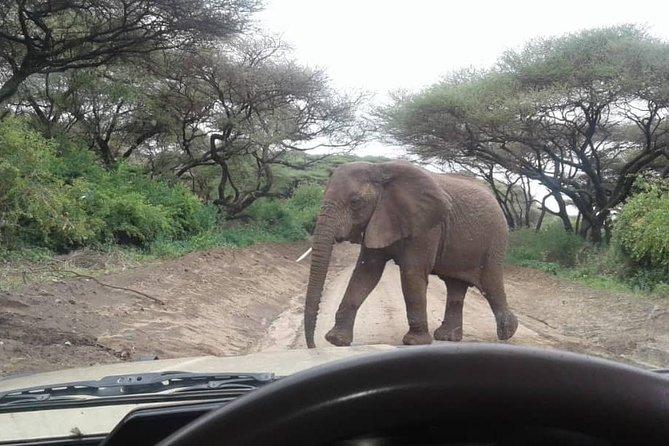Tanzania Safaris | 4 DAYS SAFARI-Serengeti NP,Ngorongoro Crater & L.Manyara NP.