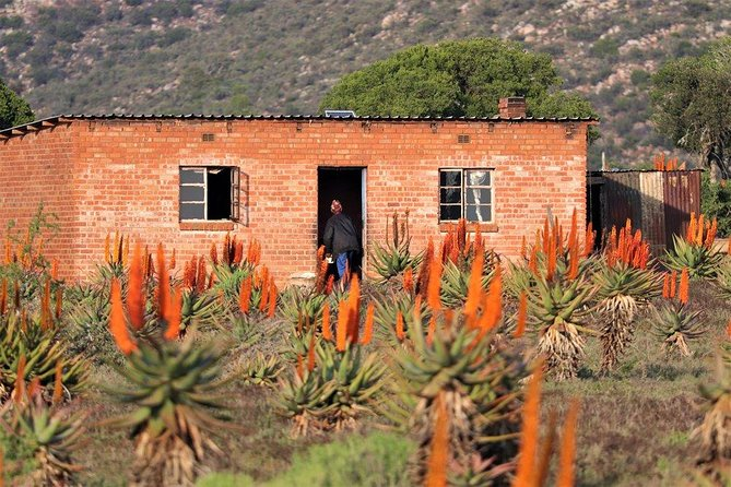 The Eastern Cape Wild Aloe Tour from Port Elizabeth