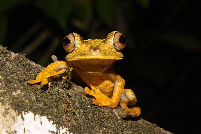 3 dias explorando a floresta amazônica | Tour De Quito a Napo, Equador