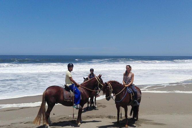 Horseback Riding Peruvian Paso Horses