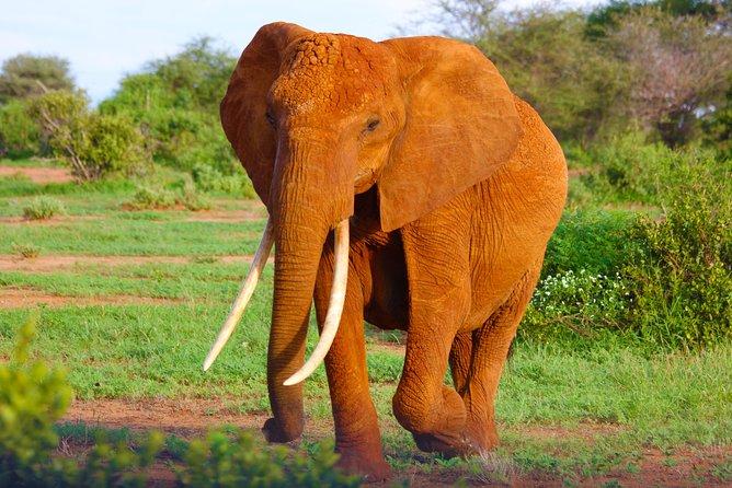 3 Day African Safari-Masai Mara
