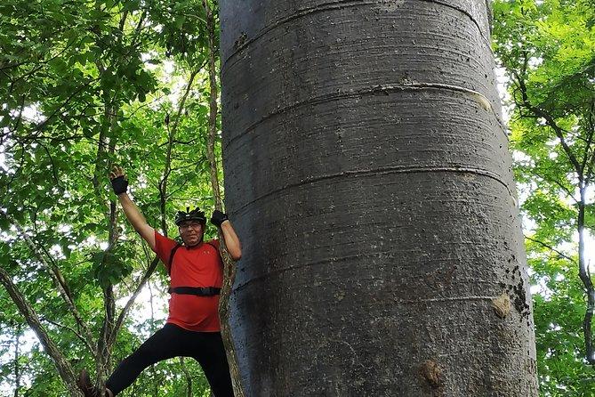 Bicycle tour: Bosque de los Gigantes - La Esperanza - from Guayaquil
