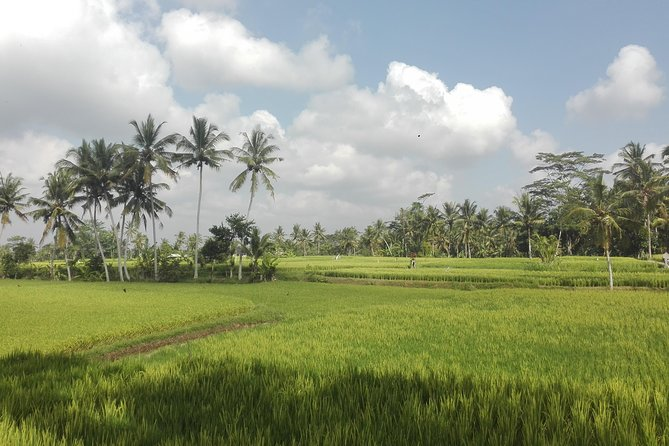 explore rice paddies and water fall in Bali