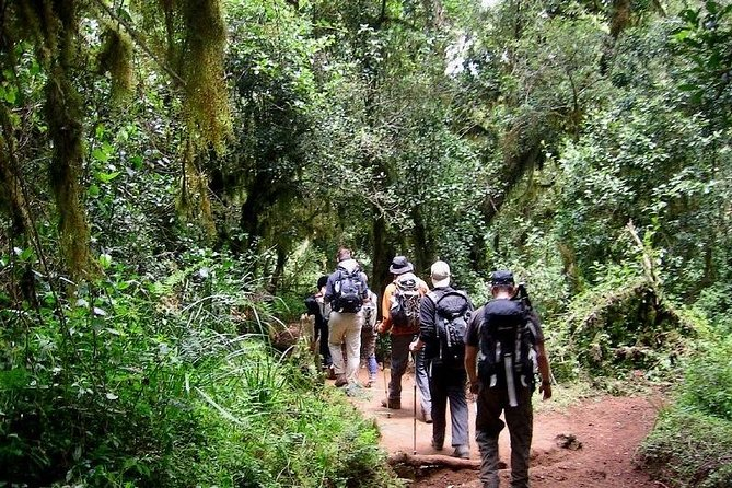 8 Days Mount Kilimanjaro Lemosho Route Climb photo 1