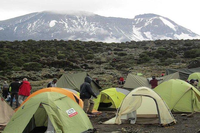 Mount Kilimanjaro climbing,7 days Lemosho Route.