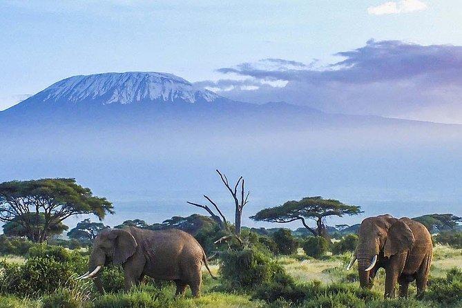7 Days Mount Kilimanjaro Machame Route Climb.