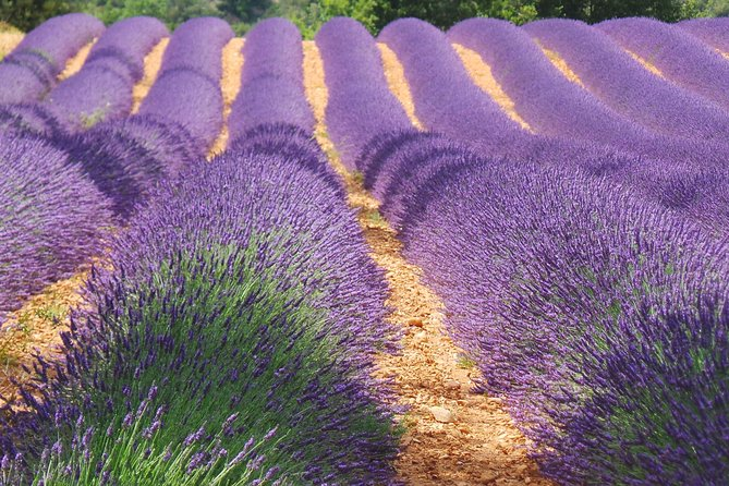 9 Hour private tour special : the breathtaking Lavenderfields