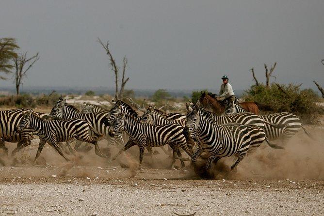 Horse safaris in Tanzania