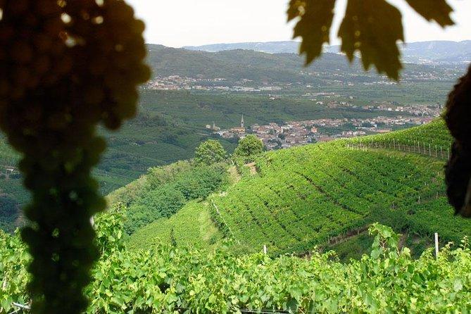 Amarone-Soave wine tour. Visit Verona. From Venice