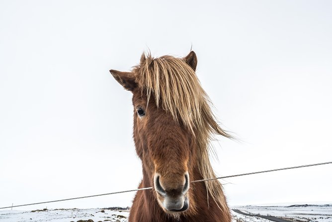 Small-Group Golden Circle Tour including Kerid, Fridheimar & Icelandic Horses