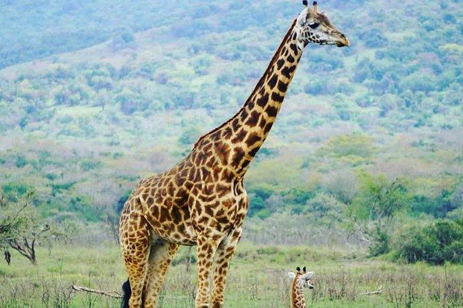 Akagera National Park Safari & Lake Muhazi