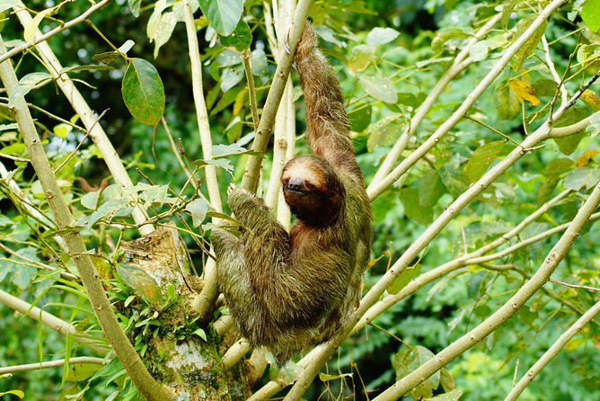 Sloth Watching Park