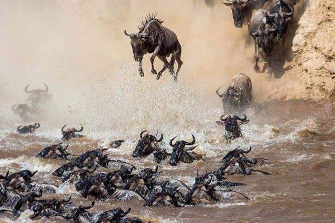 8 Days of Top Safari Parks Amboseli-Manyara-Serengeti-Ngorongoro