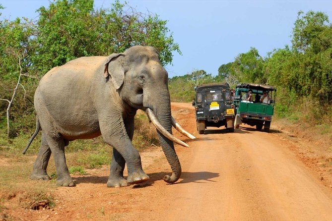 Wilpattu Day Tour from Anuradhapura