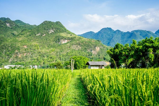 4 days private tour trekking in Mai Chau with homestay photo 6