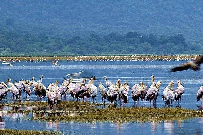7 Days Best of Tanzania Lodge Safari