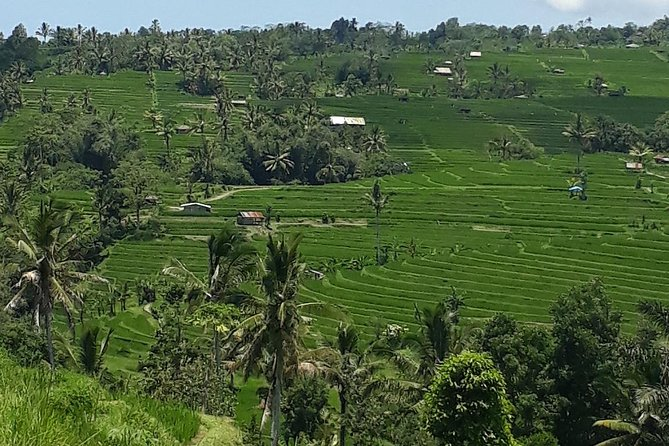 Bali Tour 3 Days Round Trip; Discover Secret Panorama of Bali