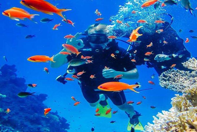Discover Scuba Dive (Shore)