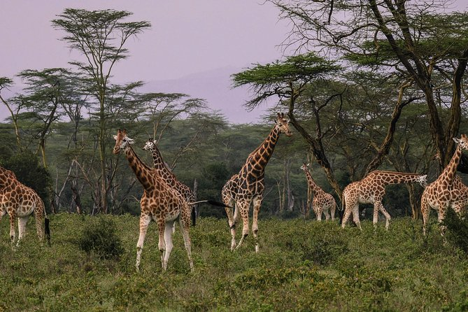 Lake Nakuru Day Tour From Nairobi