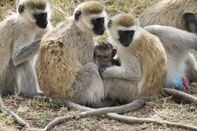 2 Days Northern Circuit Safari (lake Manyara & Ngorongoro) photo 2